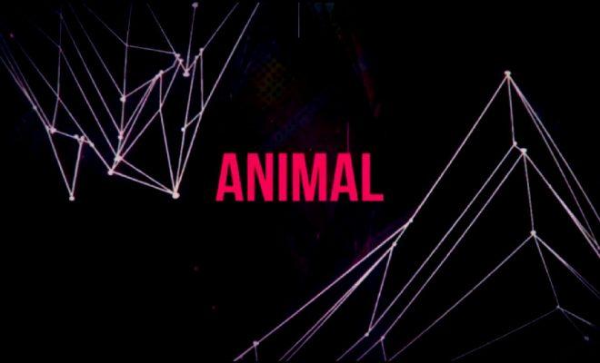 "Dyemare - ""Animal"""
