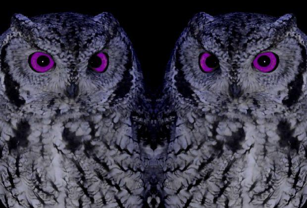"WinstonW - ""Purple Eden"""