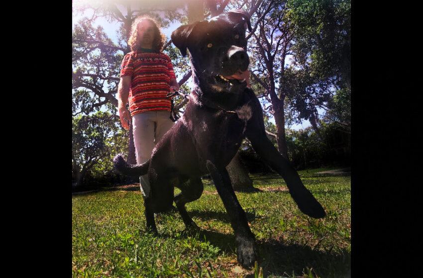 Cam Gersh – The Big Dog
