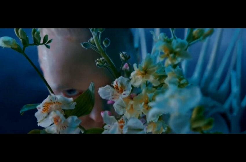 "Betweenzone – ""Flower Lady"""