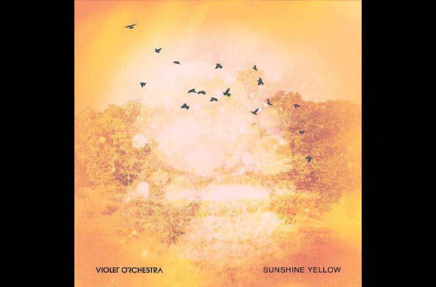"Violet Orchestra – ""Sunshine Yellow"""